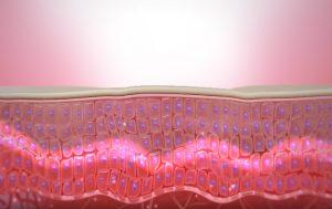 細胞膜が元に戻った図